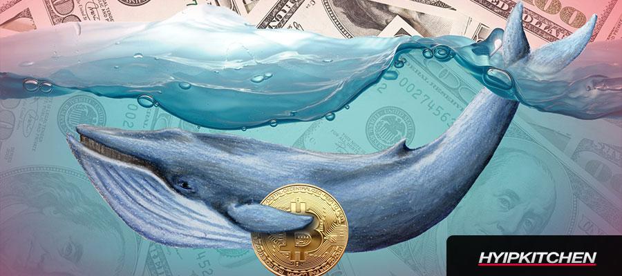 Крупные инвесторы массово покупают Биткоин — 25,600 Bitcoin (BTC) стоимостью 1.2 млрд.$ ушло с Coinbase на прошлой неделе